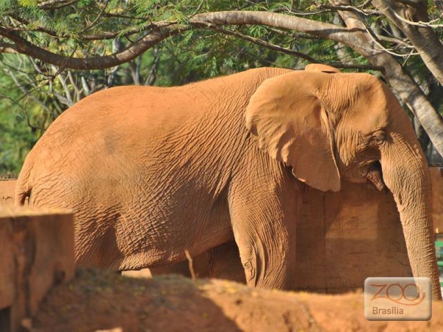 صور من حديقة حيوان برازيليا في imagem-03.jpg?w=640
