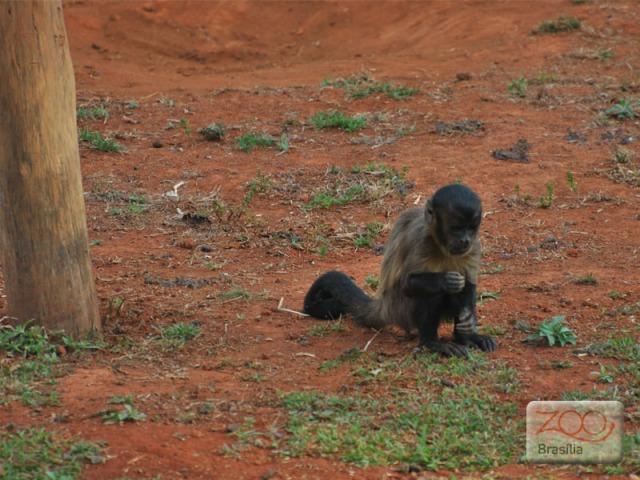 صور من حديقة حيوان برازيليا في imagem-07.jpg?w=640