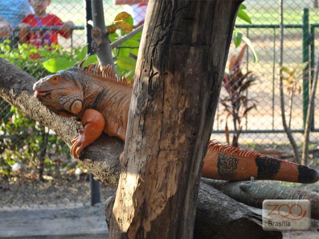 صور من حديقة حيوان برازيليا في imagem-11.jpg?w=640