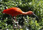 طيور الحديقة الوطنية2