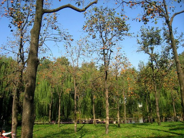 800px-Beijing_Zoo_-_Oct_2009_-_IMG_1229