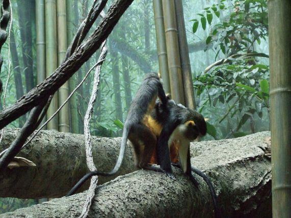 800px-Bronx_Zoo_033
