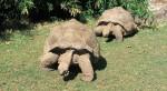 حديقة حيوان اديليد