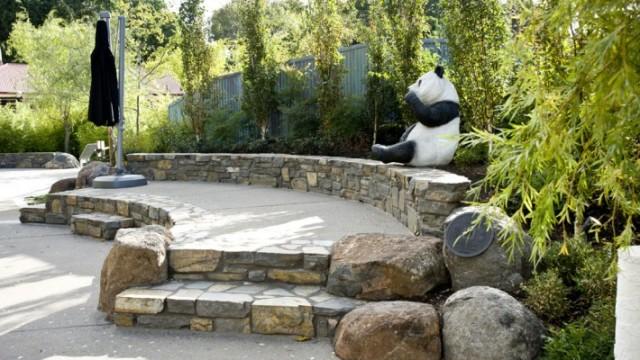 Adelaide-Zoo-Panda-1-710x400