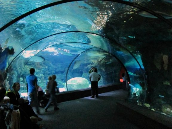 aquarium-tunnel-henry-doorly-zoo-omaha-united-states+1152_13323864834-tpfil02aw-20906