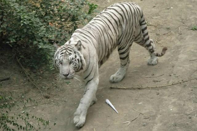 BJ Zoo-6