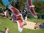 تارونغا حديقة الحيوان