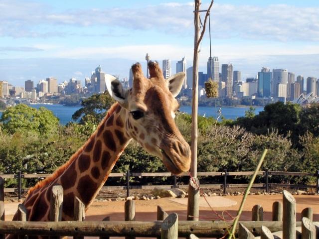 Sydney Zoo 19a Blog