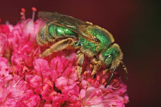 female agapostem gordon frankie
