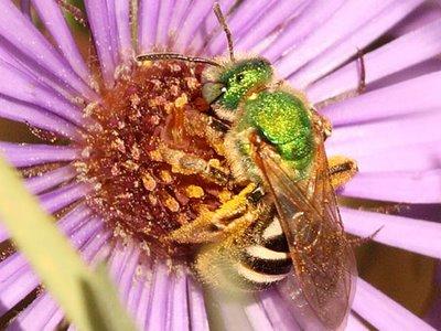 MN08 green bee 239_0714