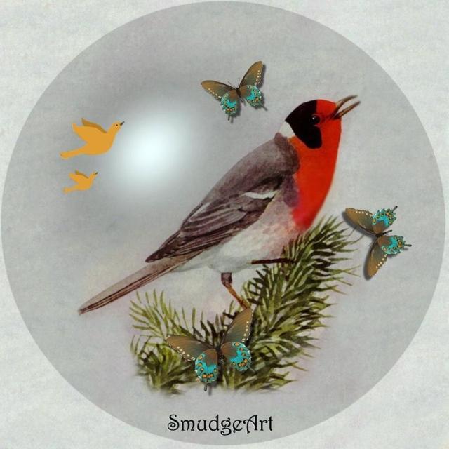 -red-faced-warbler-madeline-m-allen