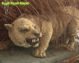 zanzibarleopard