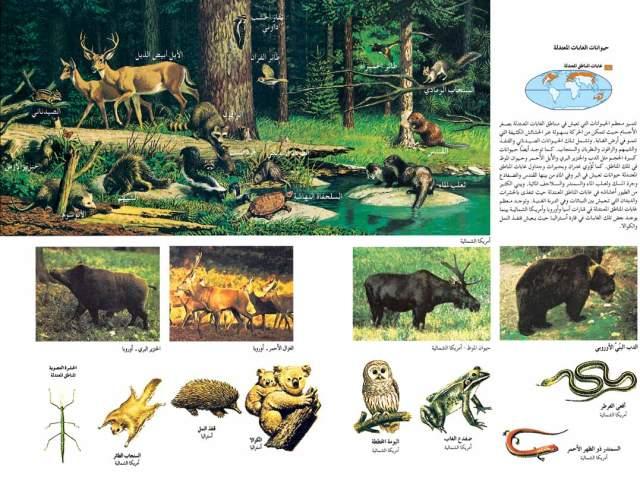 حيوانات الغابات المعتدلة