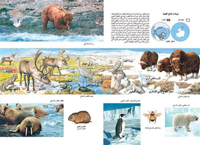 حيوانات المناطق القطبية