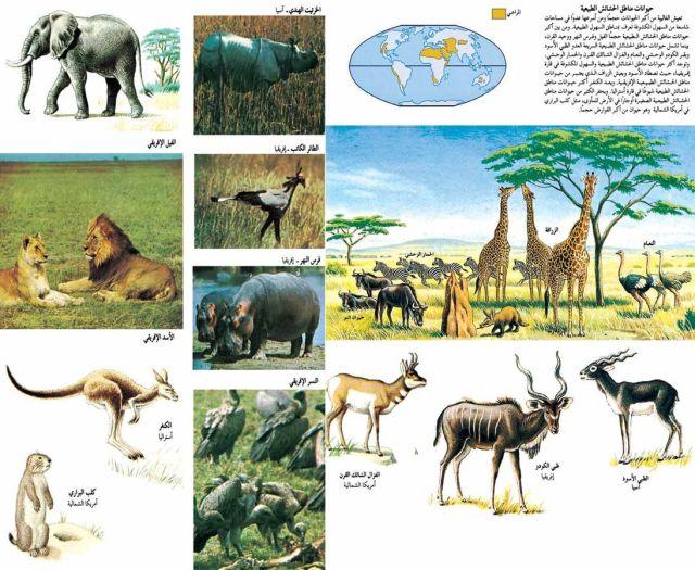 حيوانات مناطق الحشائش الطبيعية2