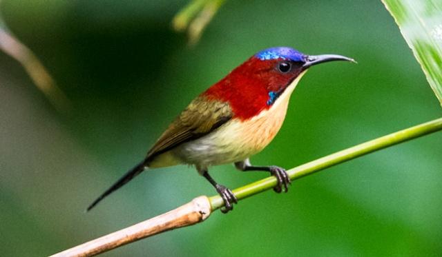 lovelysunbird2
