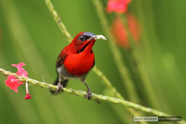 VSING_BIRD_0703(pp_m1327821494_a50_pBR)
