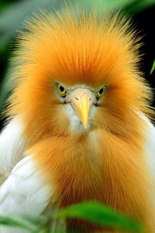 7b1fd85d0e529481d4e09ac5110c945a--angry-birds-exotic-birds